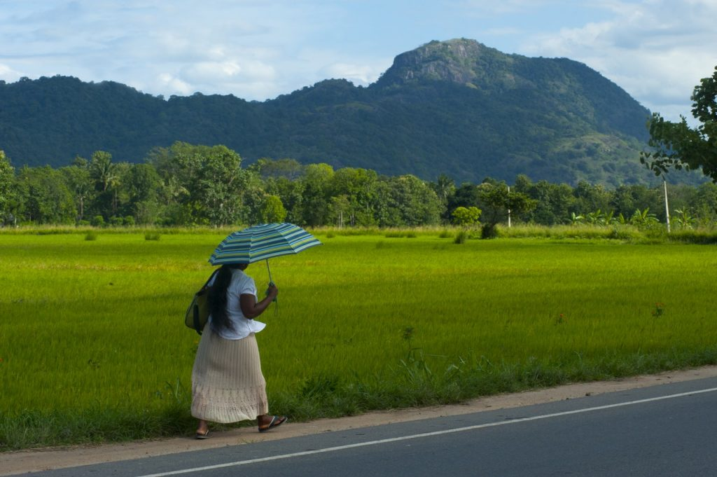 Lady holding umbrella walking past green plain